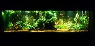 Zahradní jezírka: Akvárium 600l