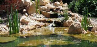 Zahradní jezírka: jezirko bechovice