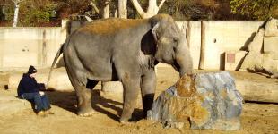 Zahradní jezírka: kamen pro slony