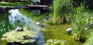 Zahradní jezírka: koupaci jezirko hajek
