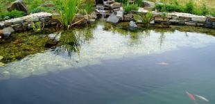 Zahradní jezírka: koupaci jezirko osnice02