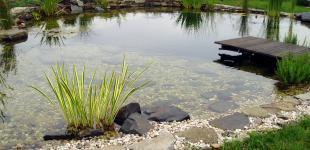 Zahradní jezírka: koupaci jezirko osnice