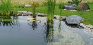 Zahradní jezírka: stavba koupacího jezírka Osnice - jezírko hotovo02