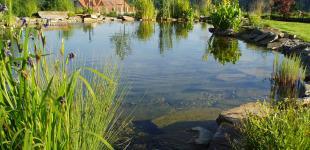 Zahradní jezírka: stavba koupacího jezírka Sázava - hotové jezírko02