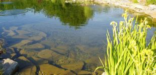 Zahradní jezírka: stavba koupacího jezírka Sázava - hotové jezírko