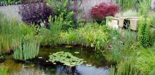 Zahradní jezírka: zahradni jezirko cercany