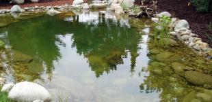 Zahradní jezírka: zahradni jezirko horomerice