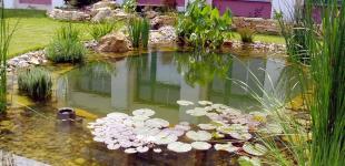 Zahradní jezírka: zahradni jezirko nebusice